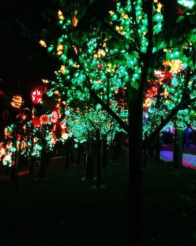 Dailyphoto Ledlight Trees Girls Night Out Randomshot Csfphotograph