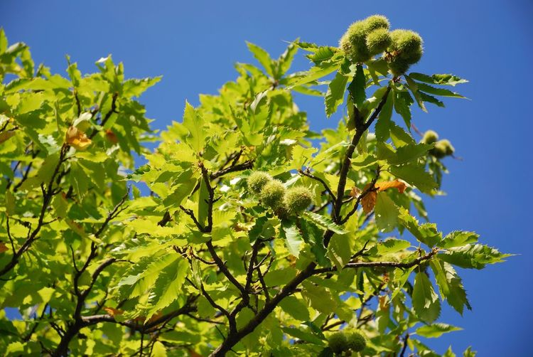 Low angle view of flowering plant against clear sky