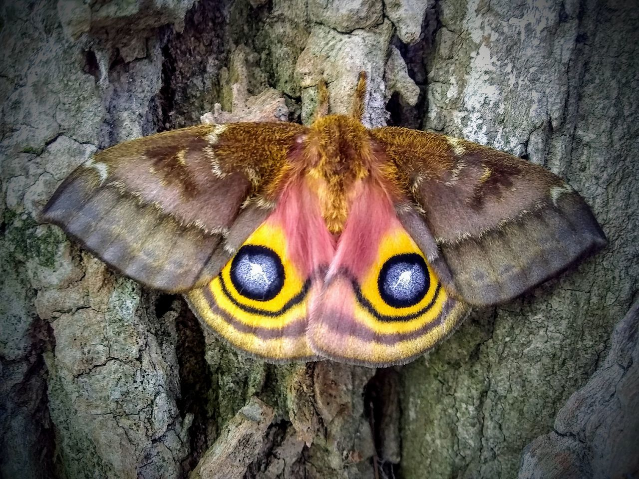 animal themes, animal, one animal, animal wildlife, animals in the wild, close-up, insect, animal body part, invertebrate, no people, tree trunk, trunk, nature, day, eye, tree, textured, moth, outdoors, zoology, animal wing, animal eye, animal head, butterfly - insect