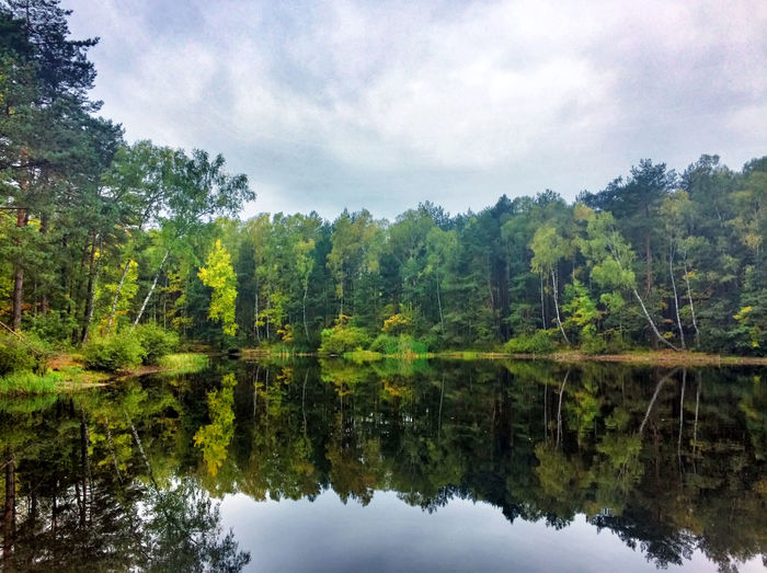 Beauty In Nature Cloud - Sky Day Forest Growth Lake Nature No People Outdoors Reflection Scenics Sky Symmetry Tranquil Scene Tranquility Tree Water Waterfront