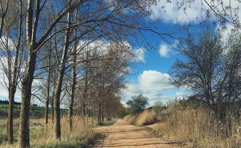 Nature Sky Landscape Branch Beauty In Nature Scenics CaminodeSantiago Camino SPAIN Torres Del Rio Bare Tree Navarre Pilgrims On The Way