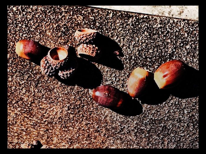 Fallen Acorns High Angle View Gravel Outdoors Day Sunlight Fall Beauty Trees Nut Squirrelfood Iphonephotography Colorphotography Nature_collection