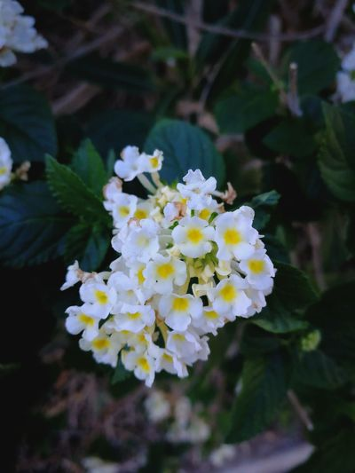 Flower Fragility White Color Nature Beauty In Nature Freshness Close-up Outdoors Cacela Velha Portugal Winter Time No Filter, No Edit, Just Photography