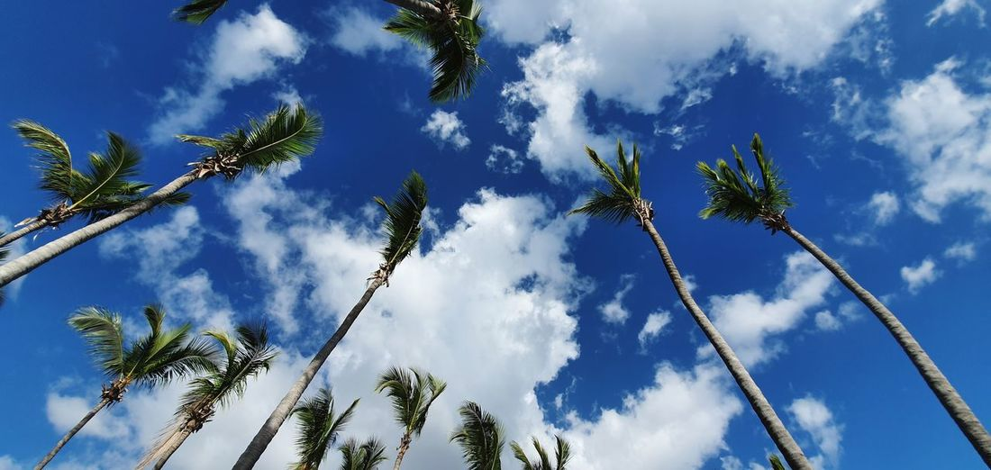 Low angle view of coconut palm trees against blue sky