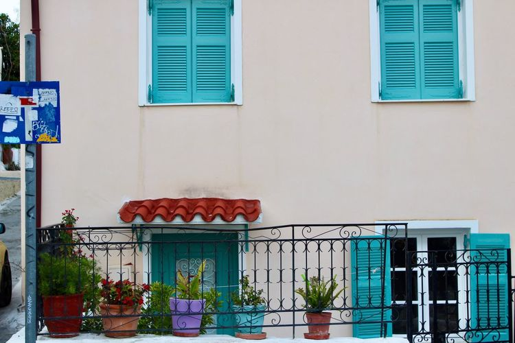 Potted plant on window of building