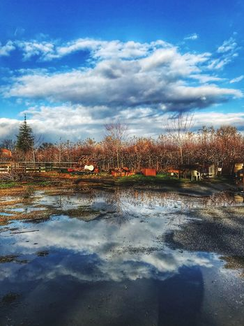 Reflection Cloud - Sky Sky Water Tree Reflection Nature Lake Tranquility Bare Tree Day Scenics Beauty In Nature Tranquil Scene Outdoors No People Cold Temperature