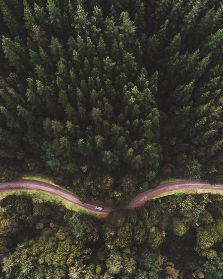 Tree Growth Tranquility Nature Curve Plant Beauty In Nature No People Outdoors Winding Road Day Traveling Home For The Holidays Flying High