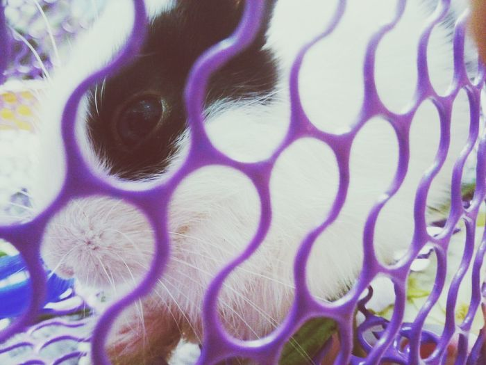 😘 Full Frame No People Backgrounds Close-up Day Rabbits 🐇 Cute Pets Adorable Rabbit Eyes Indoors  Cute♡ Cute Animals Domestic Pets Sweet♡ EyeEm Pets