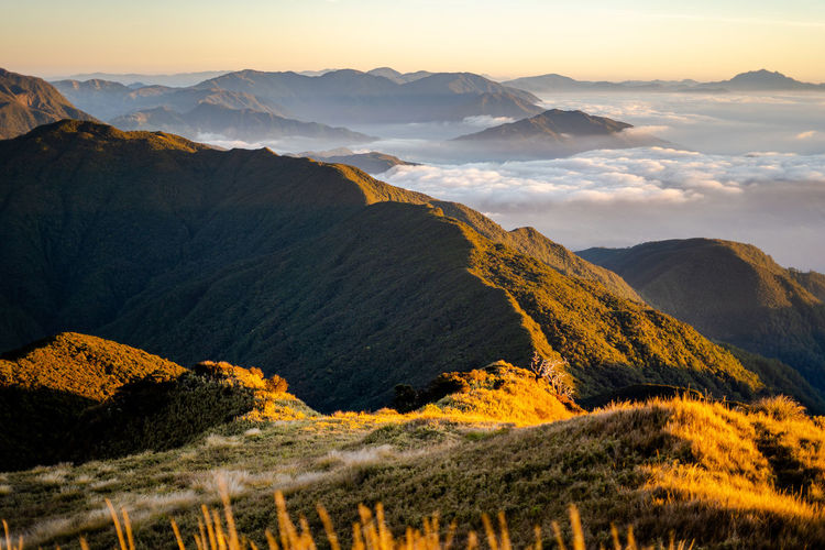 Scenic view of the sea of clouds at the summit of mount pulag national park, benguet, philippines.
