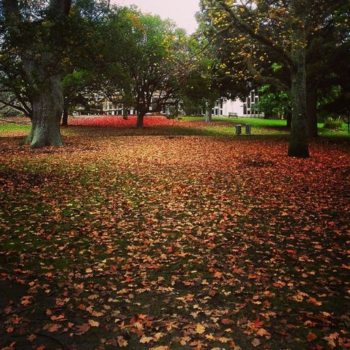 Admiring the grounds of uni before being a nerd and heading into the study centre Exams Medschool Study Winter Autumn Leaves Aucklanduniversity Auckland Outdoors Nature