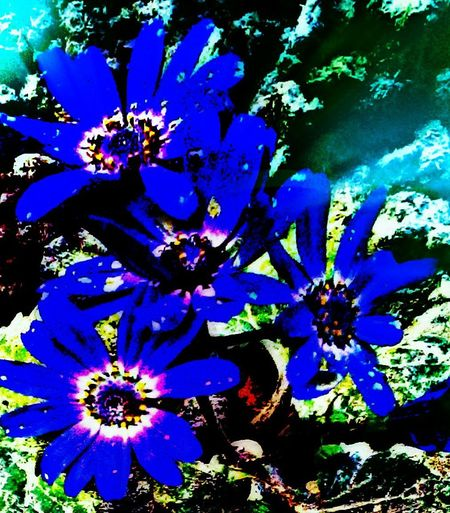 Showcase: February Neon Effect Lighting Effect Nature_collection Flowers Getty Images Mobile_photographer Autumn Collection Autumn🍁🍁🍁 EyeEm Nature Lovers Winter Flowers Image Overlaying Maskingbeauty Picart Editing Picartsstudio Flower#garden#nature#ecuador#santodomingoecuador#eyeEmfollowers#iphoneonly#nofiltrer#macro_gardenprettybeautifulfollowmesho [ [ My Best Shot Lighting Effects HDR Effect Hdr_Collection Urban Garden Flowers Plants And Garden