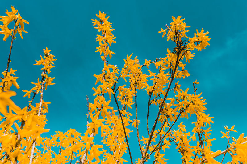 Low angle view of autumnal trees against blue sky