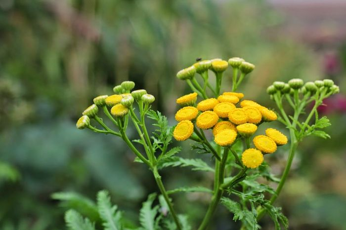 Close-up Colored Colorful Day Flower Freshness Green Color Growth Nature No People Outdoors Yellow Yellow Flower
