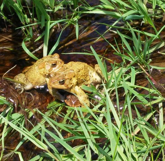 Spring Flowers Nature Photography Toadpile Toad