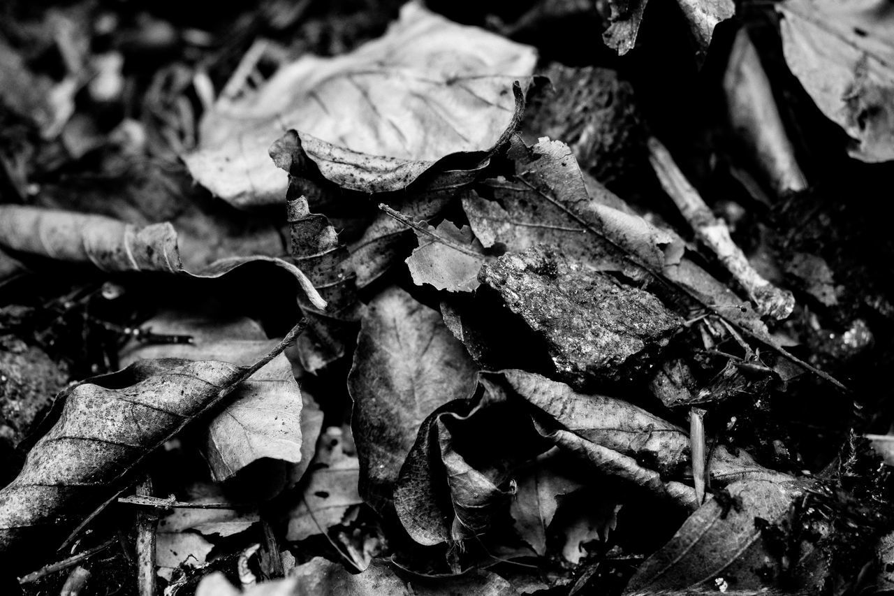 no people, close-up, leaf, plant part, nature, dry, full frame, food and drink, food, day, backgrounds, abundance, leaves, freshness, still life, large group of objects, outdoors, fragility, heap, vulnerability
