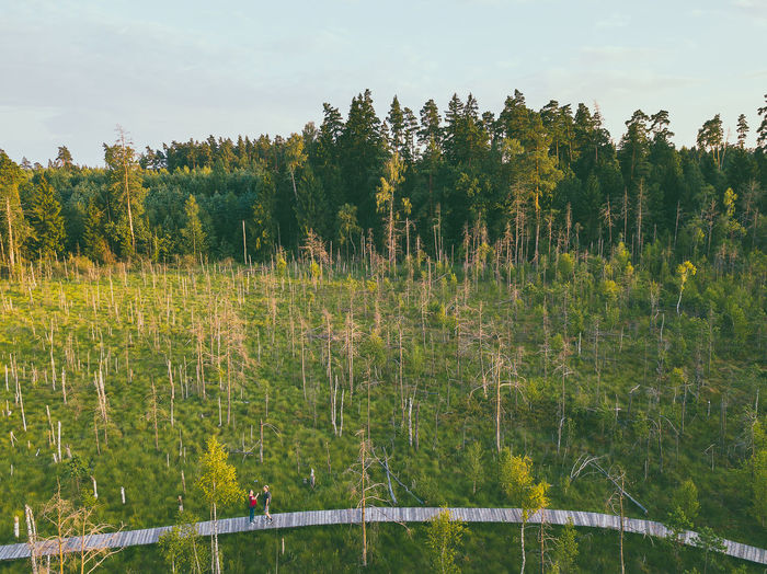 Swamp, drone aerial view. Kaunas county, Lithuania DJI Mavic Pro DJI X Eyeem Drone  Kaunas County Lietuva Lithuania Nature Nature Swamp Aerial Beauty In Nature Day Dubrava Environment Europe Field Forest Green Color Growth Land Landscape Lithuania Travel Mavic Mavic Pro Nature No People Non-urban Scene Outdoors Plant Scenics - Nature Sky Tranquil Scene Tranquility Tree Water The Great Outdoors - 2018 EyeEm Awards The Traveler - 2018 EyeEm Awards