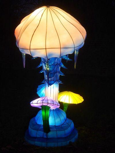 Chinese Lantern Chinese Lantern Festival Chinese Lanterns Chinese New Year Illuminations Illumination Chiswick House Lantern Festival Toadstool Toadstools Mushrooms Mushroom