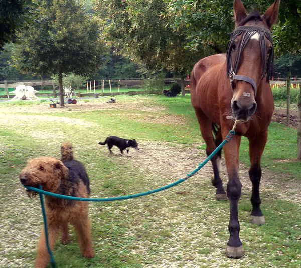 Dog Leads Horse