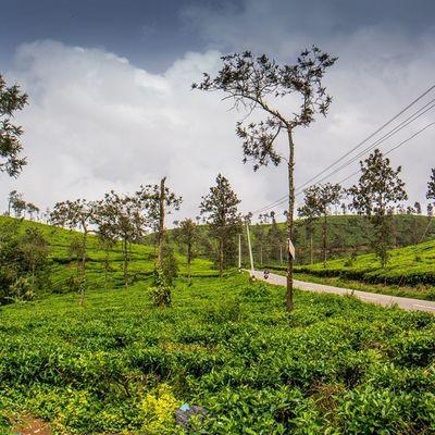 _wassup _oye _soi Wassupindia Indiabestpic Wayanad Kerala India Teagarden Incredibleindia Cloudysky Greenery Landscape Tourism Indiatourism Photography