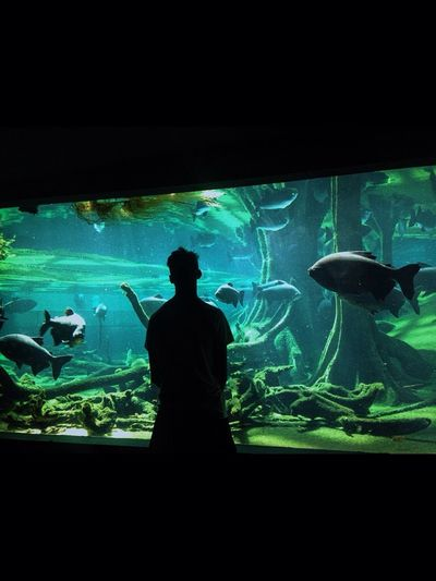 Fish Tank Boy Shadow Largefish Bigfish Big Fish Barcelona Science
