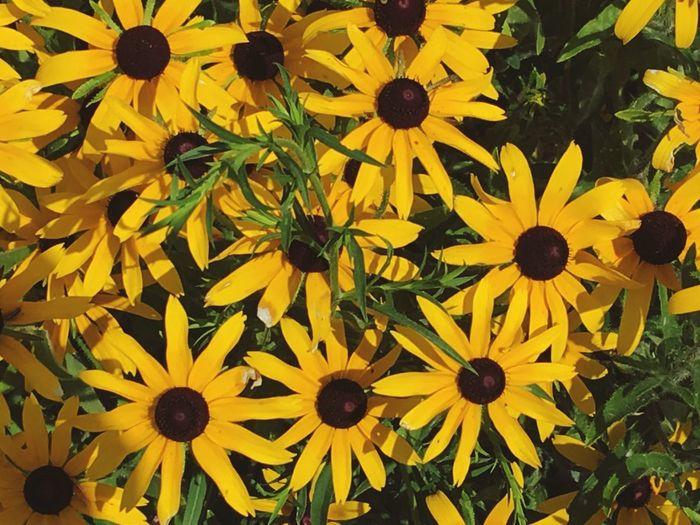 Full frame shot of yellow flowers