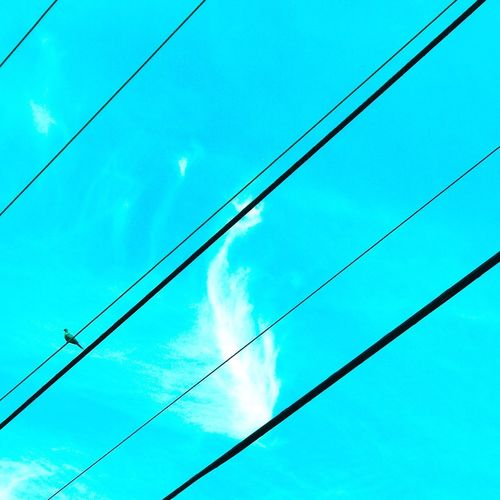 Always looking up Bluebird Sky_ Collection Birds Bird Photography Birdphotography Views From The Sidewalk Lookingup Cloud - Sky Clouds And Sky Linesandshapes Lines Birdonwire Bird Cable Blue Low Angle View Sky No People Power Line  Electricity  Wire Cloud - Sky Nature Power Supply Outdoors Power Cable Power Day Beauty In Nature First Eyeem Photo