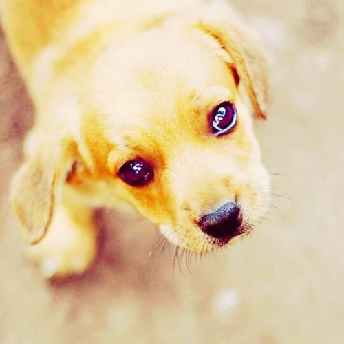 Cute♡ Puppies Puppyeyes Whysocute
