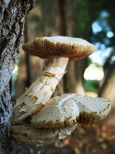 Close-up of mushroom on tree trunk