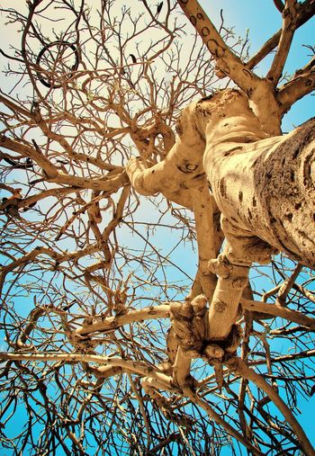 Art ArtWork Tree Branch Bare Tree Clear Sky Sky Beauty In Nature Leopard Israel Animal Themes Telavivcity Telaviv