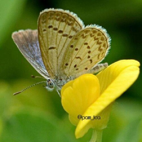 Baraya_ig Ig_captures Ig_4every1 Naturehippys hdmacros macro_captures rsa_macro ic_macro macrongawi insect_perfection jj_macro bestofmacros macro_perfection md_macro jj_insects macro_admirer my_daily_macro