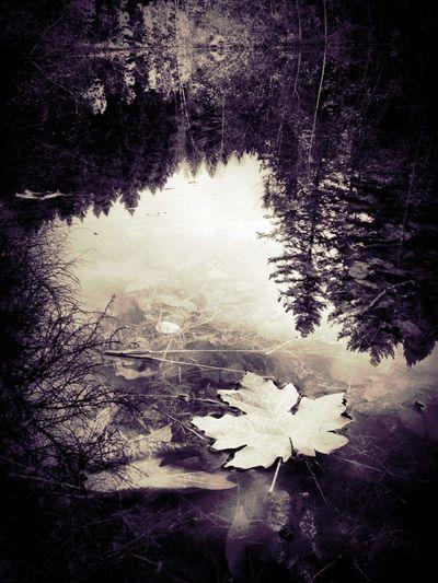 Reflecting at Grass Lake Park Reflecting