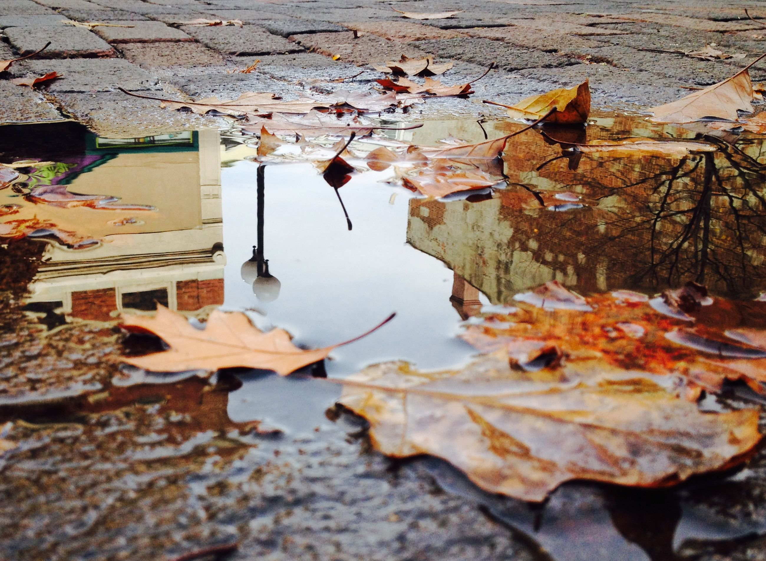 leaf, water, autumn, season, dry, change, leaves, fallen, reflection, day, built structure, nature, puddle, high angle view, outdoors, messy, no people, building exterior, architecture, rock - object