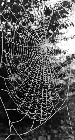 Spider Web Nature Focus On Foreground Web Fragility Outdoors No People Beauty In Nature Freshness Spider