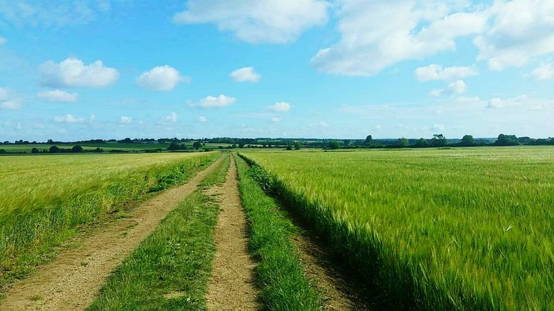 Landscape Field Tranquil Scene Sky Grass Agriculture Rural Scene Blue Landscape Field Tranquil Scene Sky Grass Agriculture Tranquility Rural Scene Dirt Road The Way Forward Farm Nature Growth Beauty In Nature Green Color Fresh On Eyeem  Crops