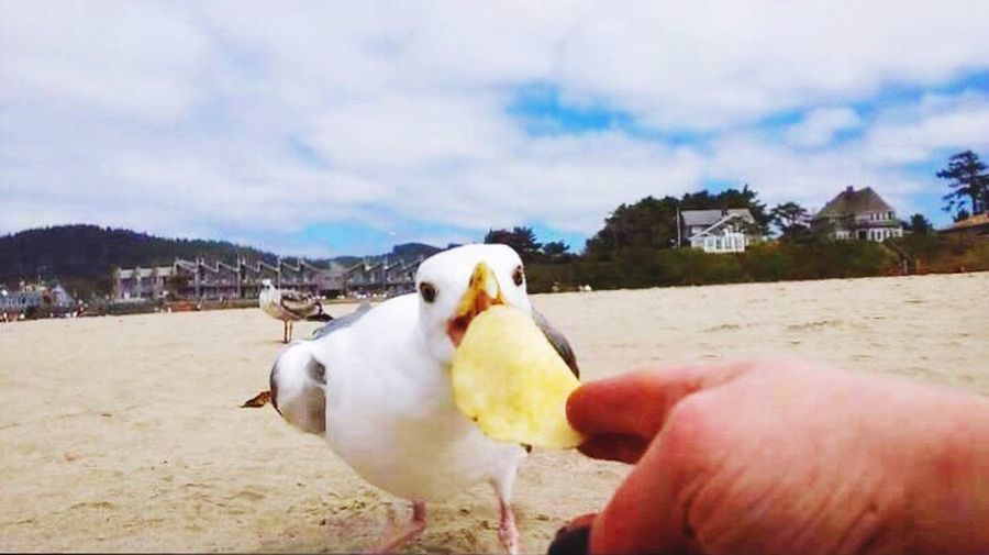 Human Hand Human Body Part Real People One Person Unrecognizable Person Holding Bird Human Finger Lifestyles Personal Perspective Sky Animals In The Wild Outdoors Seagulls Seagull Wants My Chip Day Nature Food Eating Men Beauty In Nature