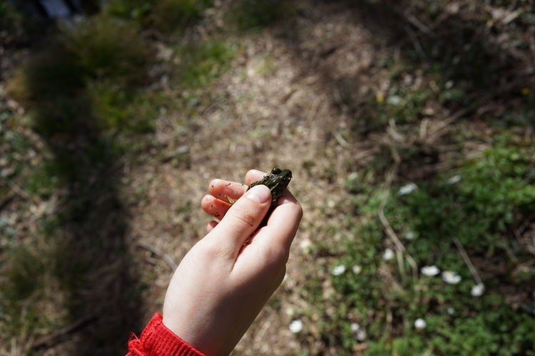 Close-up of hand holding a frog