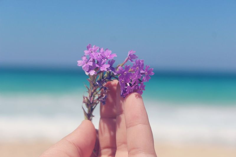 Cropped Hand Holding Flower At Beach Against Clear Sky
