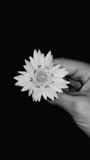 GOOD NIGHT 🌻❤️ Flower Black And White Blackandwhite Love ♥ Love To Take Photos ❤ Camera. Black And White. Bored !! Mobile Camera Photography Out Doors❤ Studio Shot Only Men Outdoors Young Adult People Nature One Person Beauty In Nature Freshness Adults Only Day Adult Fragility