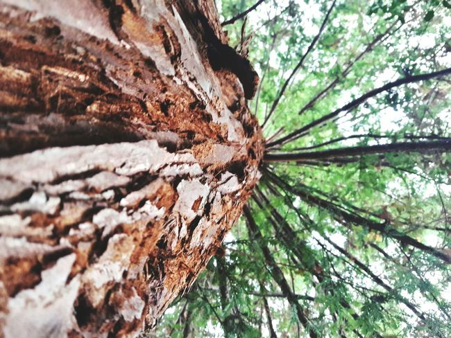 Tree Nature Tree Trunk Low Angle View Day Growth No People Outdoors Green Color Beauty In Nature Branch Close-up Sky