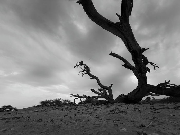 Bare tree on sand at beach against sky