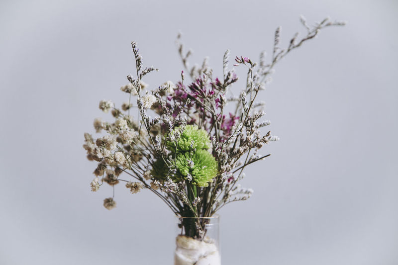 Close-up of flower vase against white background