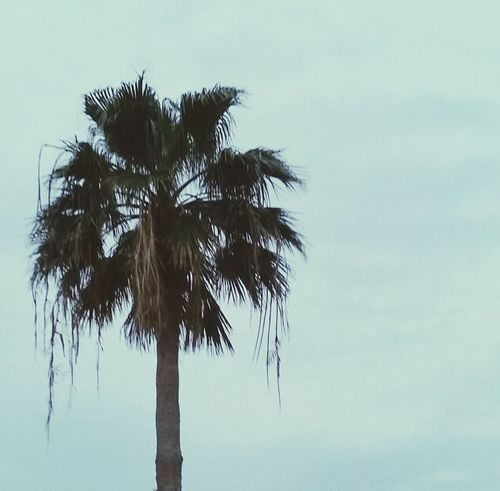 Kemah Boardwalk Palm Tree EyeEm Nature Lover Nature Photography Standstill Peaceful View Solo Tree  Grey Sky