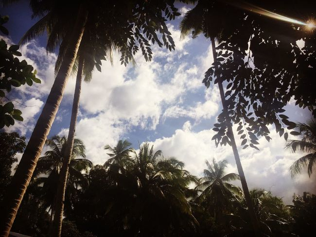 Tree Palm Tree Low Angle View Tree Trunk Growth Nature Sky First Eyeem Photo