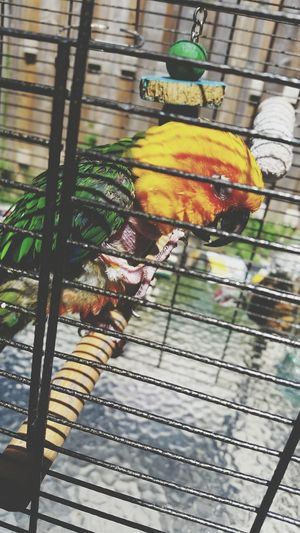 My baby is so cute Jenday Conure Conure Bird