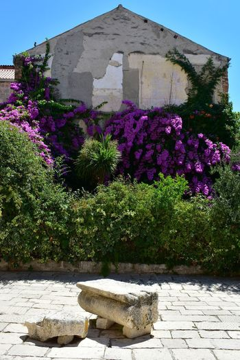 Flowers growing in garden