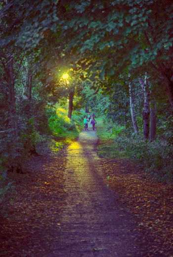Day Ferry Meadows Ferry Meadows Country Park Forest Men Nature One Person Outdoors Path People Peterborough Real People Road Sunset The Way Forward Tree Walking Wooded Path Woods