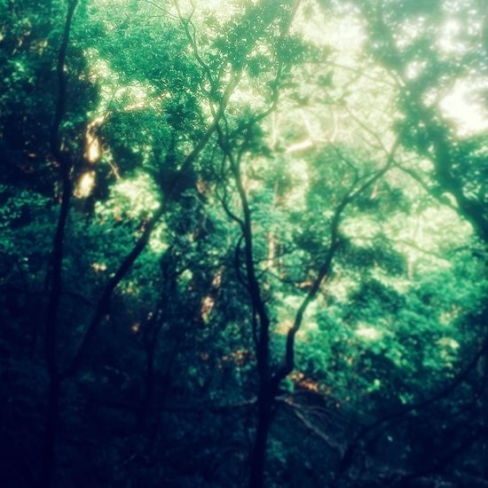 Morning in forest...