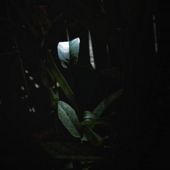 -In Search of Solitude Reflection Light Leaves Godhong Spotlight Photographcatcher Ksagamaksara