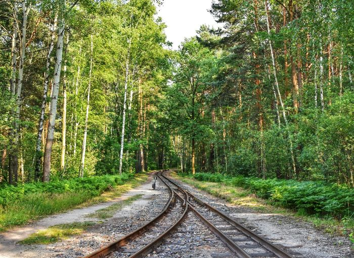 ... / Kromlau (Germany) Walking Around Germany Kromlau Forest Treescape Treescollection Summer On The Road On The Road Again Tree Forest Railroad Track Rail Transportation Grass Green Color Sky Train Track