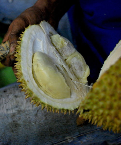 Durian Tropical Fruits Close-up Day Durian Fruit Durianlovers Durians Shop Food Food And Drink Freshness Fruits Healthy Eating Indoors  No People